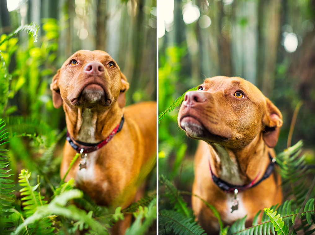 Portland Oregon Pet Photography Dog Puppy Outdoor water Best Pet Photographer lifestyle natural nature art artistic framed canvas album book animal color pit bull