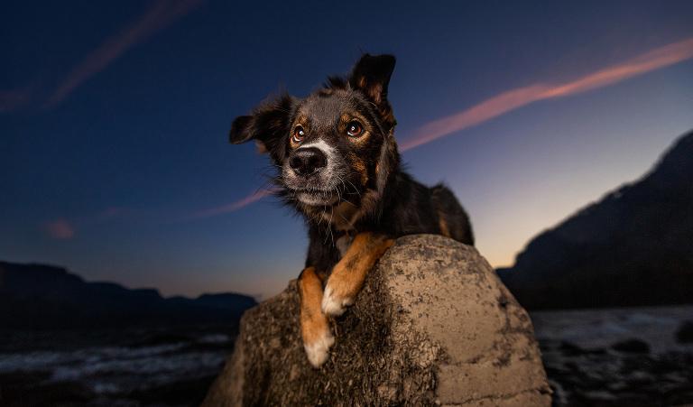 Portland Oregon Pet Photography Dog Puppy Indoor Best Pet Photographer lifestyle natural nature art artistic portrait framed canvas album book animal color rescue PDX fine art family scenic Rescue Dogs pdx Pacific Northwest