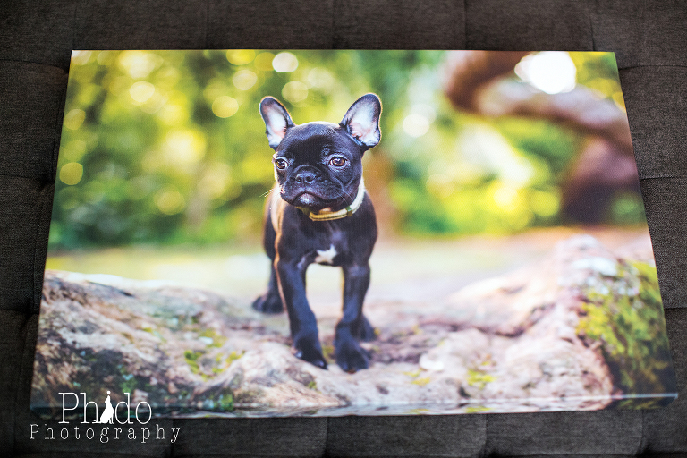 Portland Oregon Pet Photography Dog Puppy Indoor Best Pet Photographer lifestyle natural nature art artistic portrait framed canvas album book animal color rescue PDX fine art family scenic